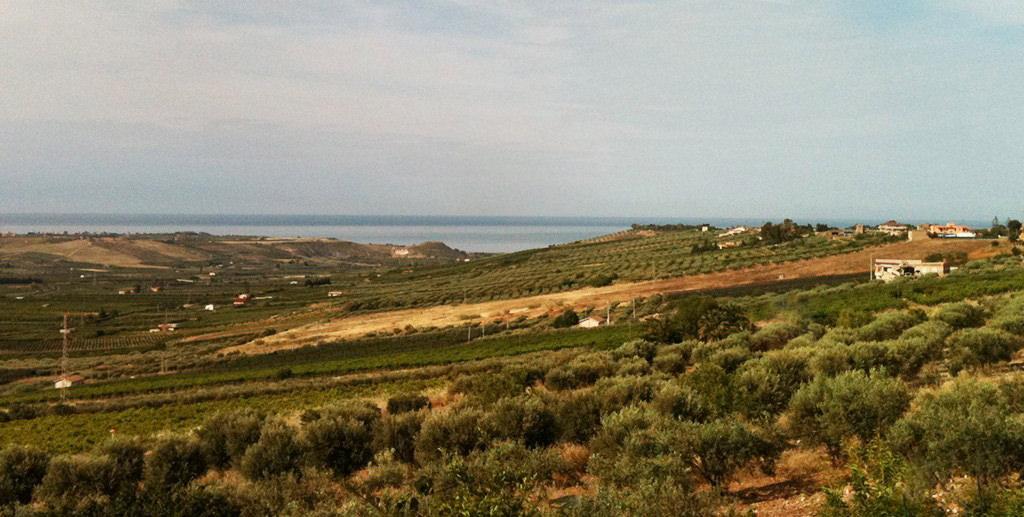 Veduta panoramica della nostra Azienda Arance Sicilia a Ribera